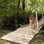 Лесная собака