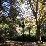 В нижнем парке