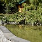 Пруд в японском садике