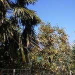 Сады Волконки